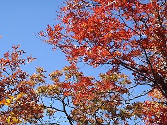 Fall-3-2011-076.jpg