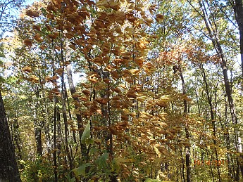 Fall-3-2011-071.jpg