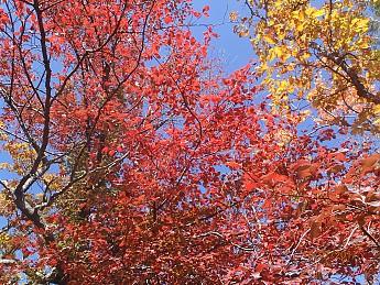 Fall-2-2011-069.jpg