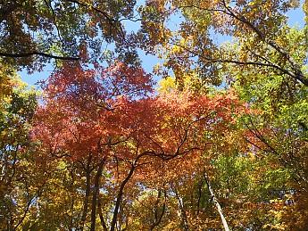Fall-2-2011-070.jpg