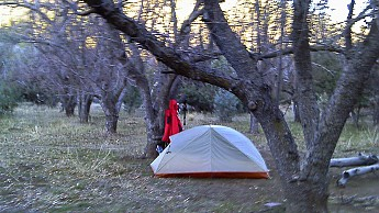 1s-camp-in-orchard.jpg