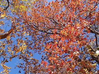 Fall-3-2011-051.jpg