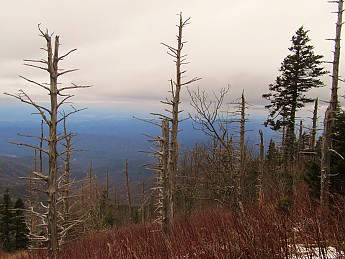 28-Beautiful-Smokies-view.jpg
