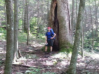 BIG-TREE-LOVE-CHEEZE.jpg