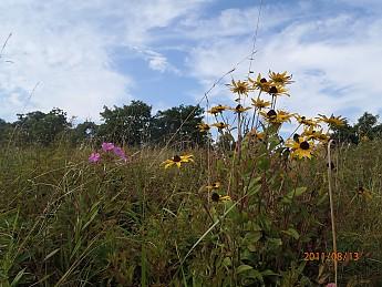 Summer-6-074.jpg