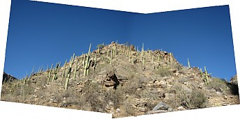 Saguaro-covered-hill-above-Bear-Canyon-T
