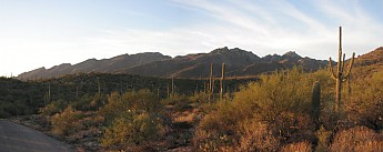 Saguaro-Sunset-at-the-Catalinas.jpg