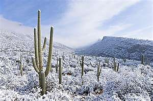 Snow-in-the-desert-around-Tucson-1986.jp