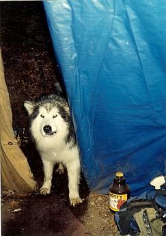 Spirit-Dog-visits-the-Tipi.jpg