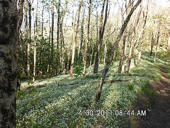 Spring-Trip-2-051.jpg