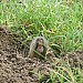 A Pocket Gopher's Smile: Carlsbad Caverns NP, NM