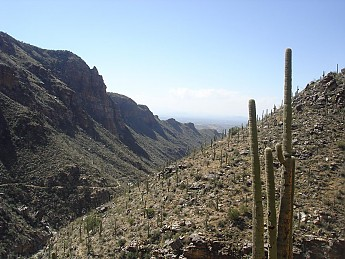 Saguaro-Cactus-and-the-Bear-Canyon-Trail