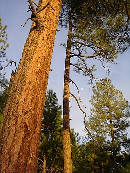 Camps-at-Shultz-Creek-Canyon-TH-032.jpg