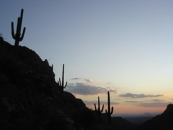 Saguaros-at-sunset-from-Bear-Canyon-2.jp