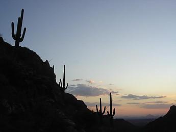 Saguaros-at-sunset-from-Bear-Canyon-2.jp