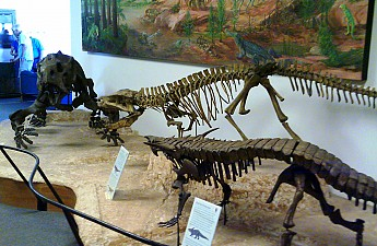 Dinosaurs-of-the-Petrified-Forest-region