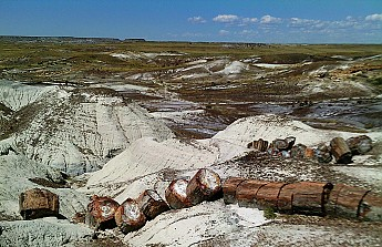Petrified-log-sections-5-PFNP-AZ.jpg