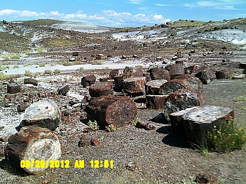 Petrified-log-sections-2-PFNP-AZ.jpg