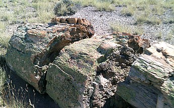Petrified-log-sections-13-PFNP-AZ.jpg