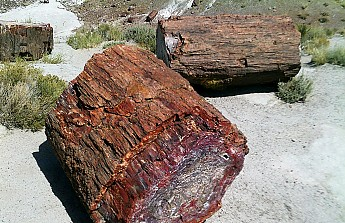 Petrified-log-sections-PFNP-AZ.jpg