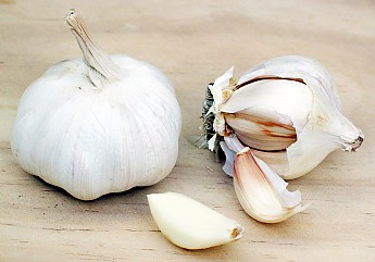 Garlic.jpg