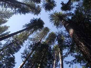 Backpacker-s-Campground-Trees.jpg