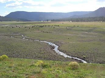 62-horses-along-Hwy-191E-Oct-1-2011.jpg
