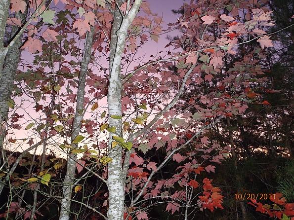 Fall-4-2011-017.jpg