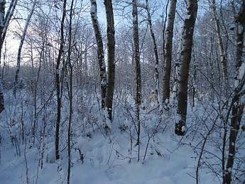 CE-Lee-8-December-2012-020.jpg