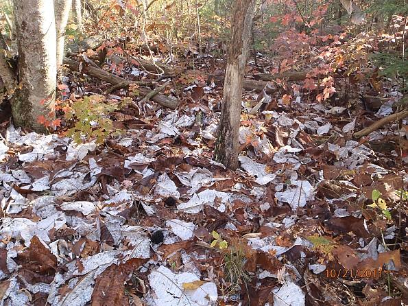 Fall-4-2011-066.jpg