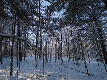 CE-Lee-8-December-2012-036.jpg