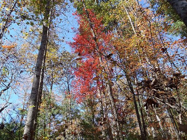 Fall-4-2011-116.jpg