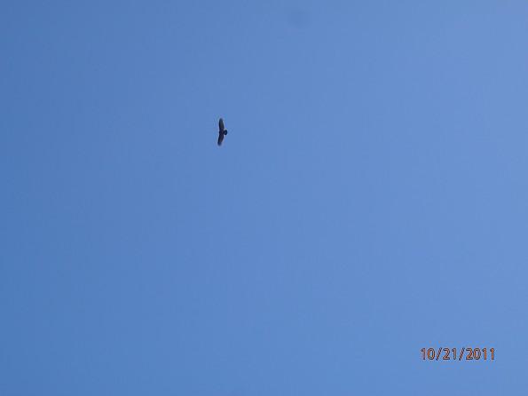 Fall-4-2011-163.jpg