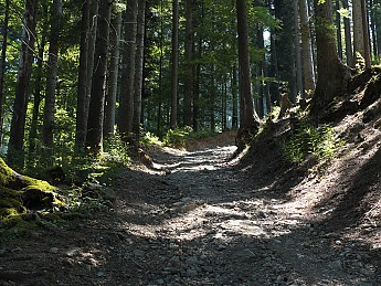 alpine-forest-trail.jpg