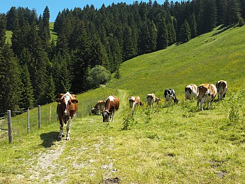some-happy-cows.jpg