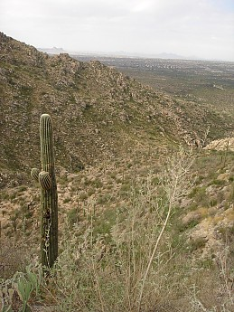 Saguaro-Cactus-along-trail-to-Romero-Poo