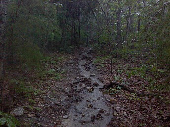 rainy_day_uwharrie_6.jpg