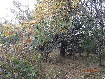 Fall-Trip-1-008.jpg