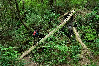 west-coast-trail-log-bridge-0306.jpg