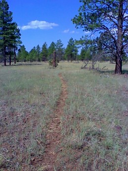 c2-Mesa-trail.jpg