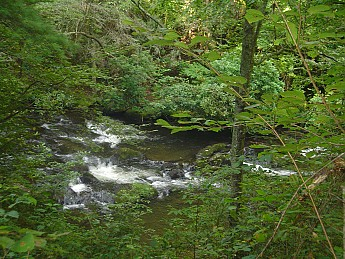 Bald-River-Gorge-2014-090.jpg