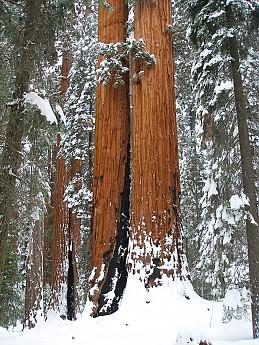 Giant-Forest-2-7-09-048.jpg