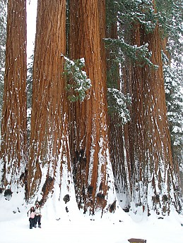 Giant-Forest-2-7-09-057.jpg