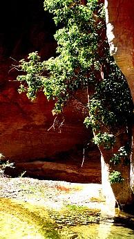 Parunuweap-canyon-16.jpg