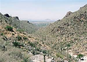 Bear-Canyon-looking-south.jpg