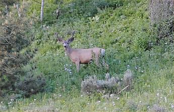 deer9.jpg