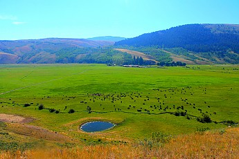 IMG_3080-Cattle-ranch-in-Spring-Creek-Gu