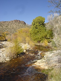 Fall-color-along-lower-Sabino-Canyon.jpg