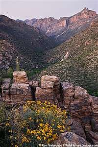 Sabino-Canyon.jpg