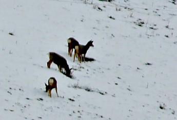 IMG_2149-Mule-deer-on-wildlife-refuge-in